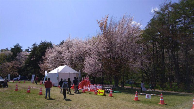 桜も残っていました